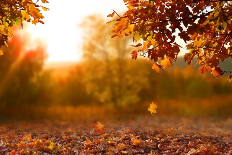 5 Best Spots to See the Leaves Change in Hamilton