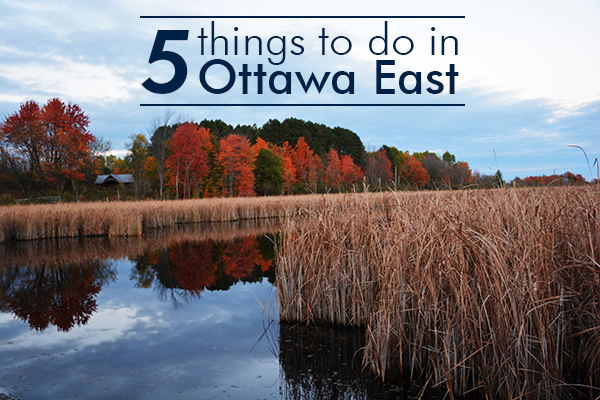 things to do in Ottawa East