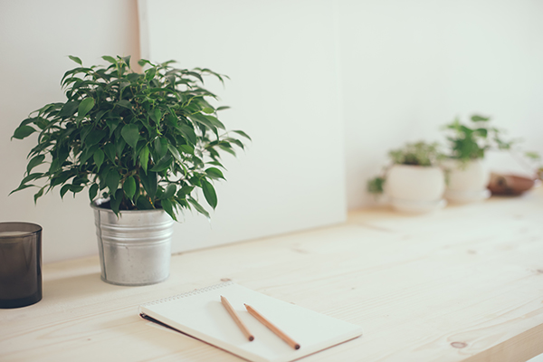 Brighten Your Desk this Winter_CLV Group_Office Plants