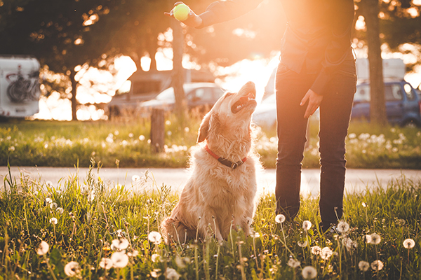 Dog Parks to Check Out Around Your CLV Group Apartment