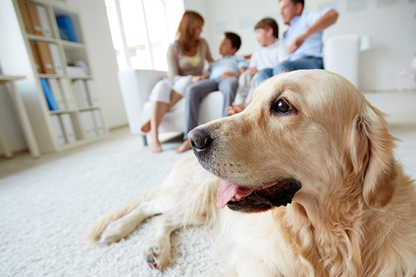 Why Pet Friendly Apartment Living is Better For Your Health CLV Group